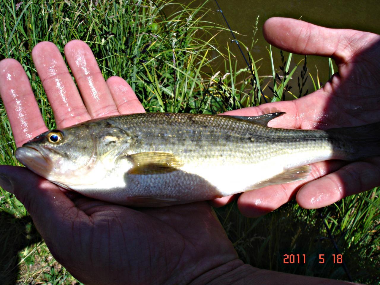 Pêche de Black-Bass en Bretagne