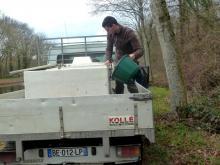 Alevinage de sandres Canal Ille & Rance